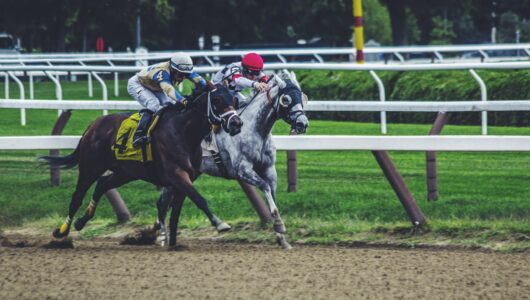 Belmont Stakes 2019 Betting